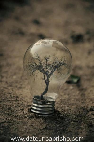 ideas-para-reciclar-bombillas-de-luz-14