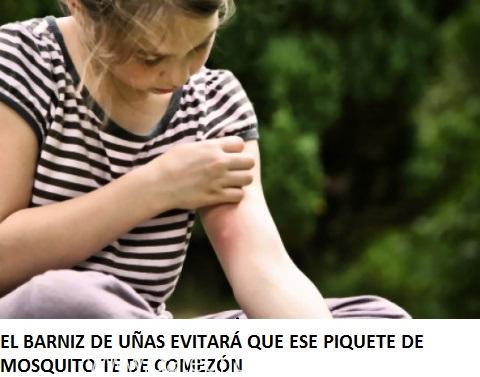 mosquito_1