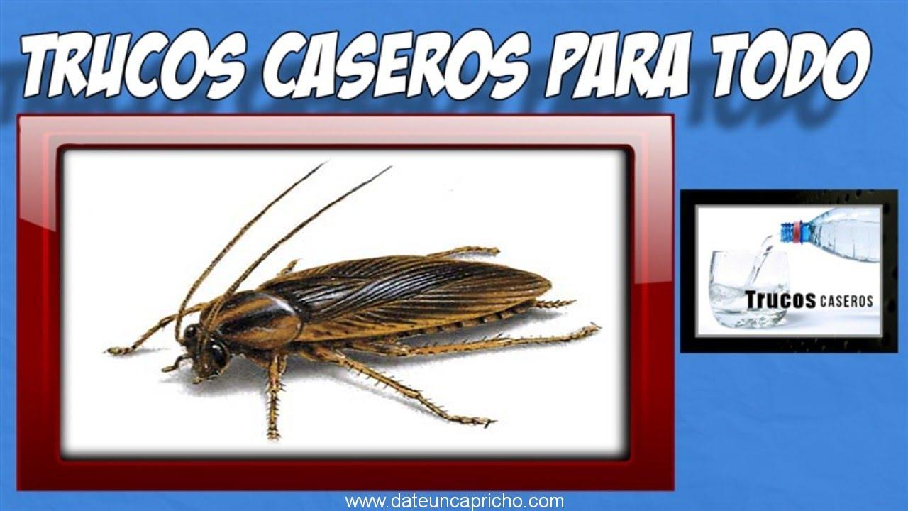 Photo of Como deshacerse de las cucarachas en casa de forma natural – Trucos caseros