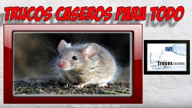 Como deshacerse de los ratones con remedios caseros naturales.