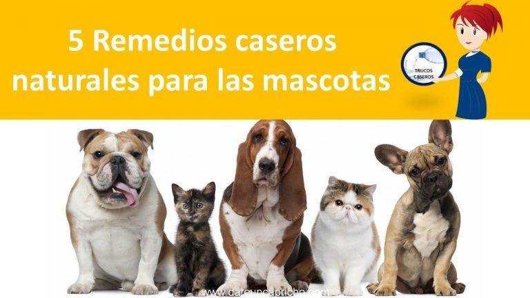 5 Remedios caseros naturales para las mascotas