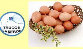 6 Razones para incluir los huevos en tu dieta diaria.
