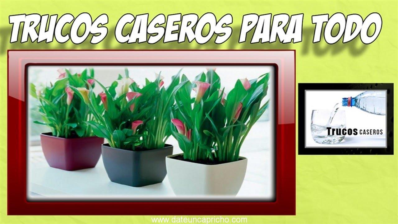 Trucos y remedios caseros naturales para abonar las plantas de tu hogar