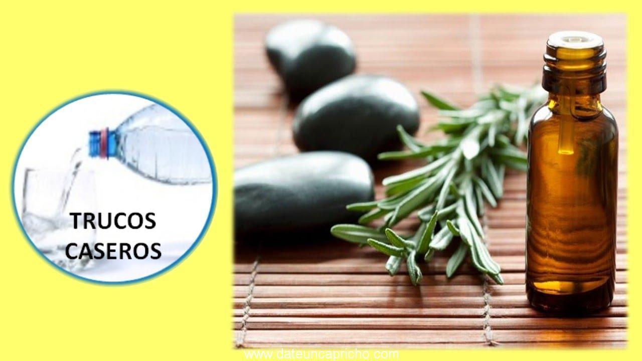 uso y propiedades del aceite esencial del arbol del te