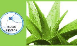 Propiedades y beneficios del Aloe Vera para la salud.