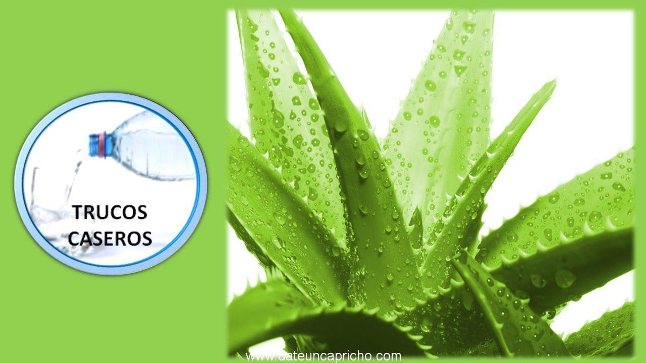 Photo of Propiedades y beneficios del Aloe Vera para la salud.