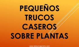 Trucos plantas de interior – Jardinería.